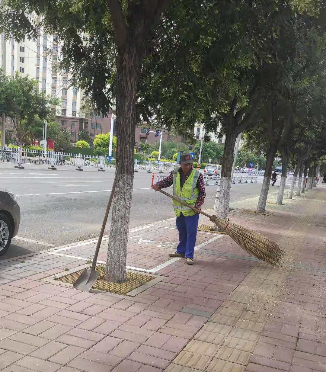 槐花朵朵落满地 环卫工人忙清理
